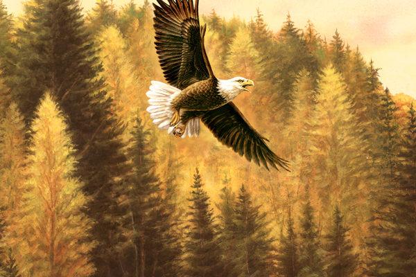 GREGCO Eagle