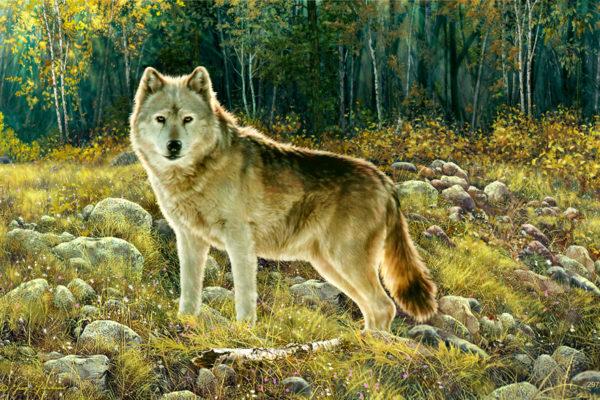 GREGCO Wolf 297